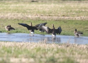 Wexford_Wildfowl_Reserve-4